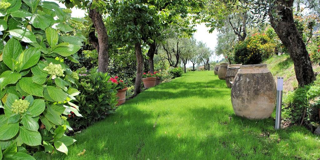 Der Garten mit Zitronen, Kaki-Früchten und Oliven