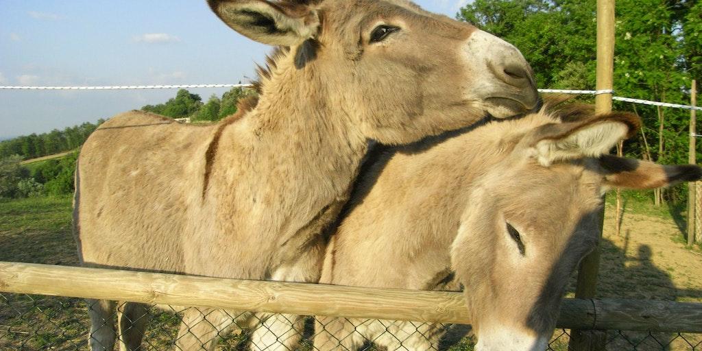 <p>Besuchen Sie im Hinterhof die Esel</p>