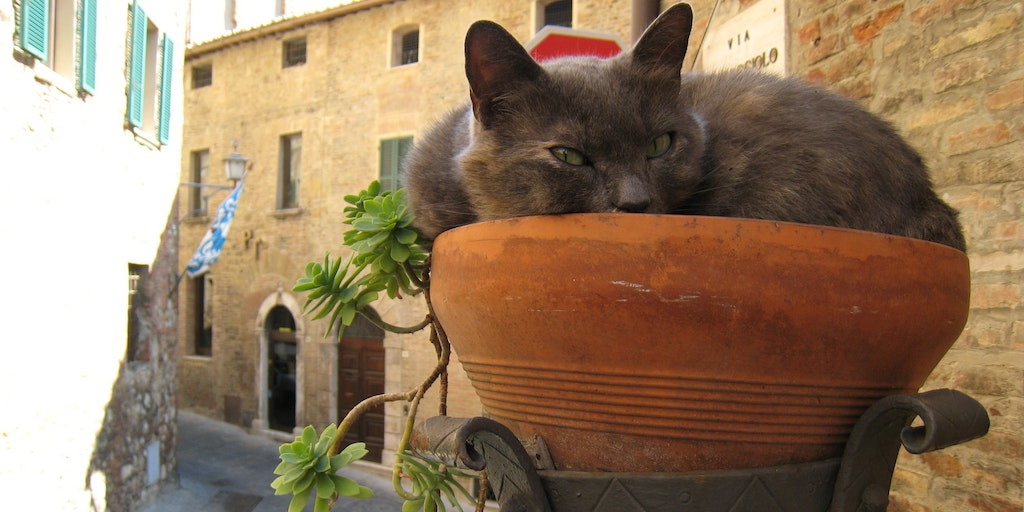 A cat in Montepulciano