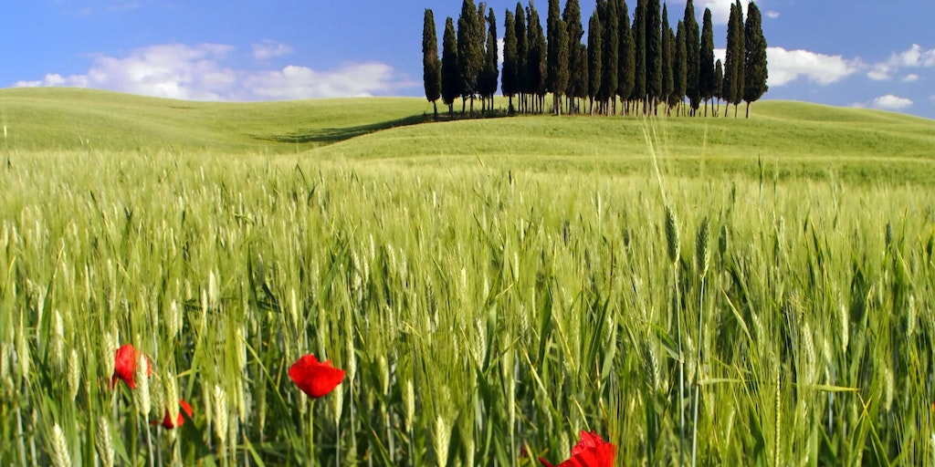 Carrental Tuscany