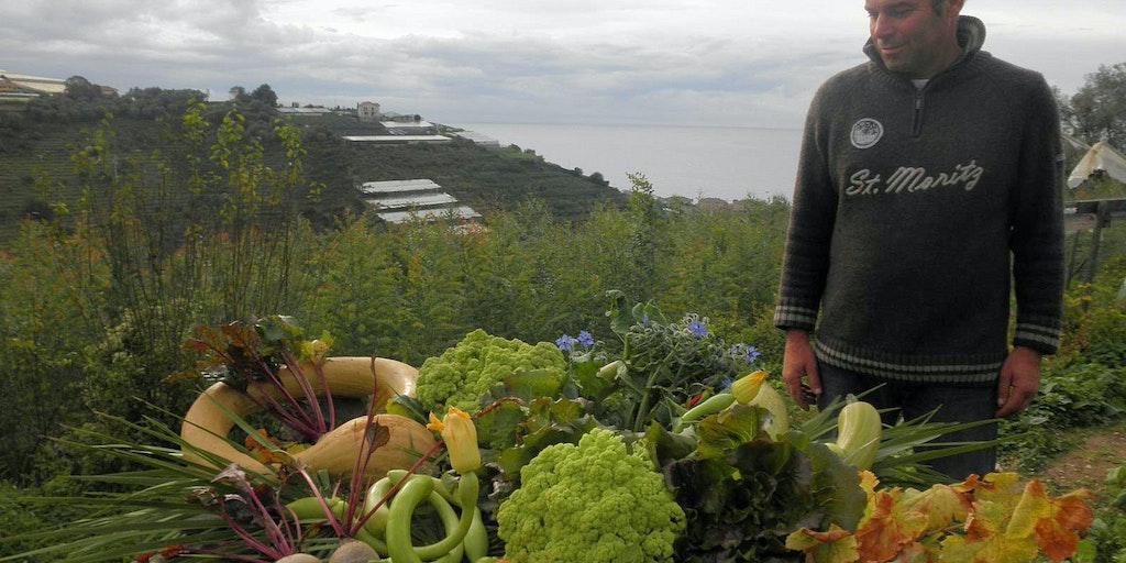 Nino pflückt sein Gemüse im Alla Collina sul Mare in Ligurien