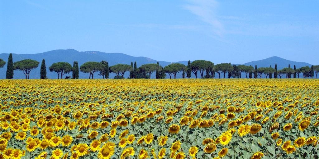 Voyage en voiture en Toscane (photo: Flickr)