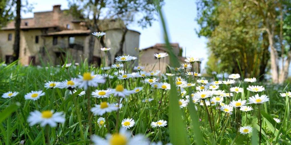 Hold ferie på et Agriturismo i Norditalien med In Italia.