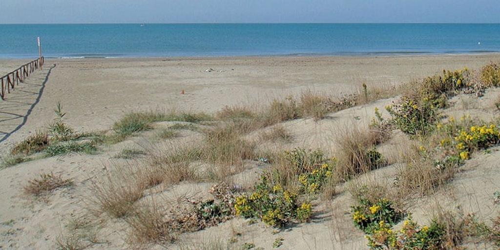 La plage de Calambrone