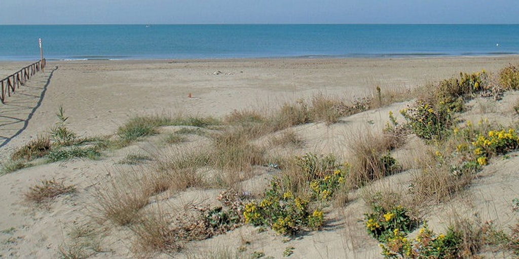 The beach in Calambrone