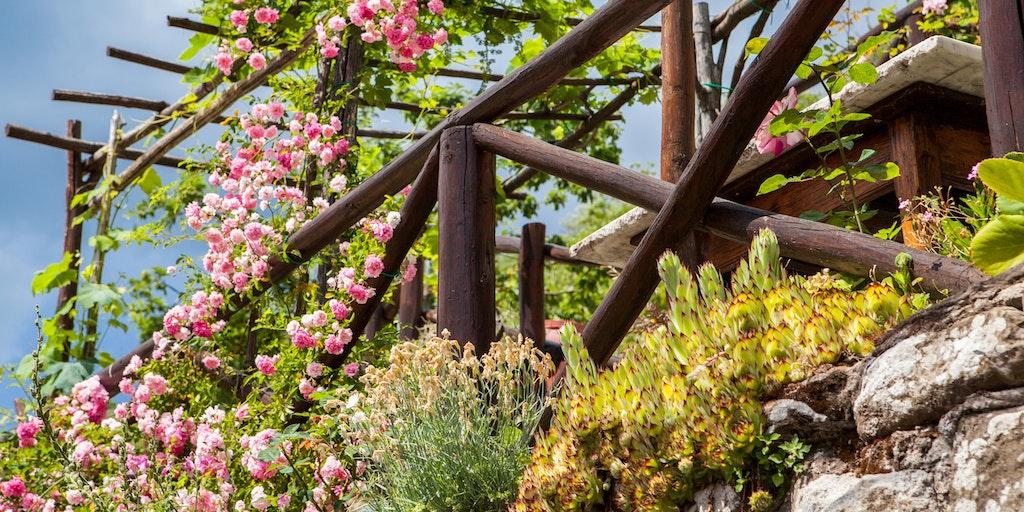 Fleurs et roses sur la <em>pergola</em>