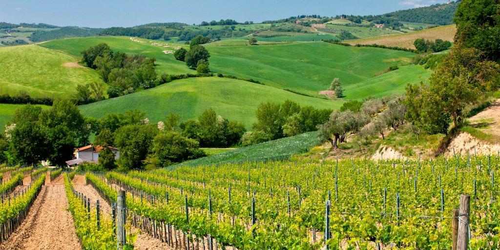 Umbrien er kendt for de bølgende grønne marker, meget lig Toscana