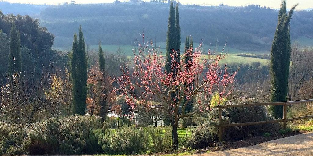 <p>Frühling bei La Torraccia di Chiusi</p>