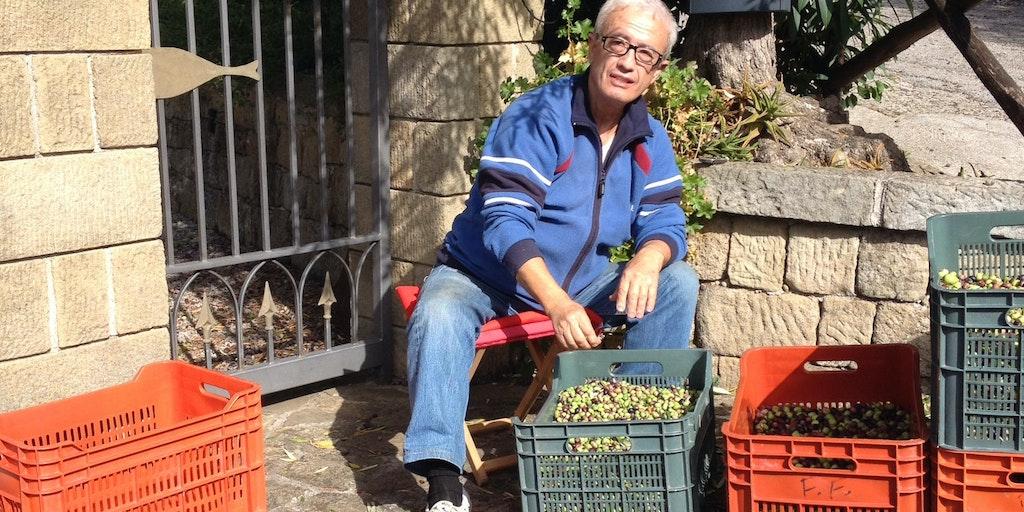 Oliver sorteras från blad och små kvistar