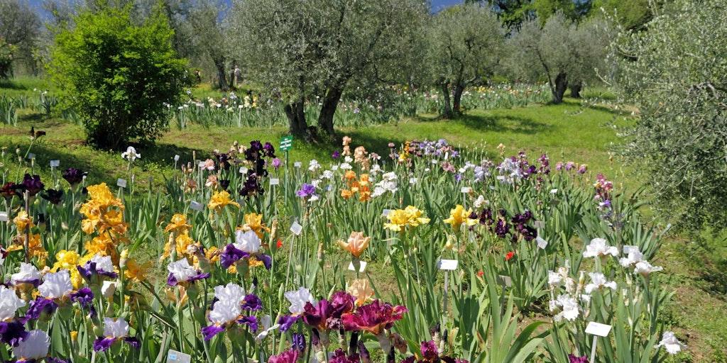 """Toscana byder på mere end """"bare"""" mad og vin: )"""