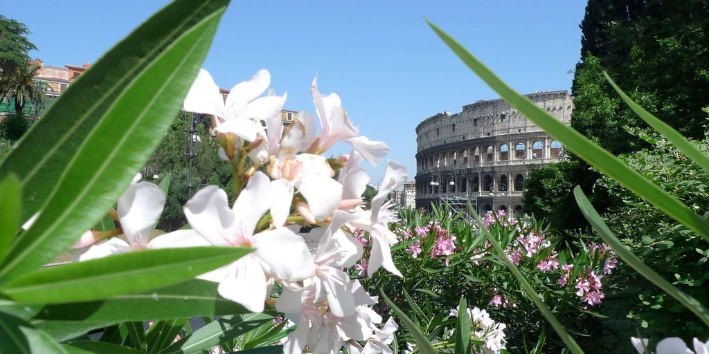 Resor till Rom med massor av upplevelser
