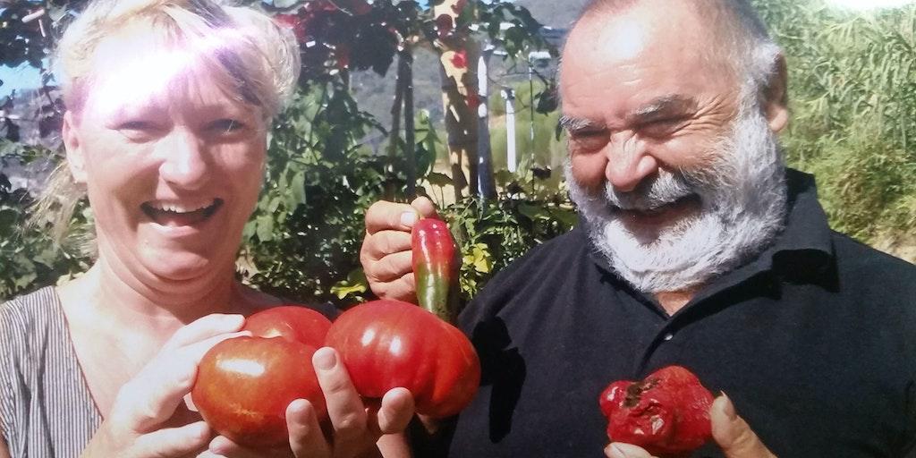 Pier jubler - sammen med en gæst - over sin egen produktion af tomaterne