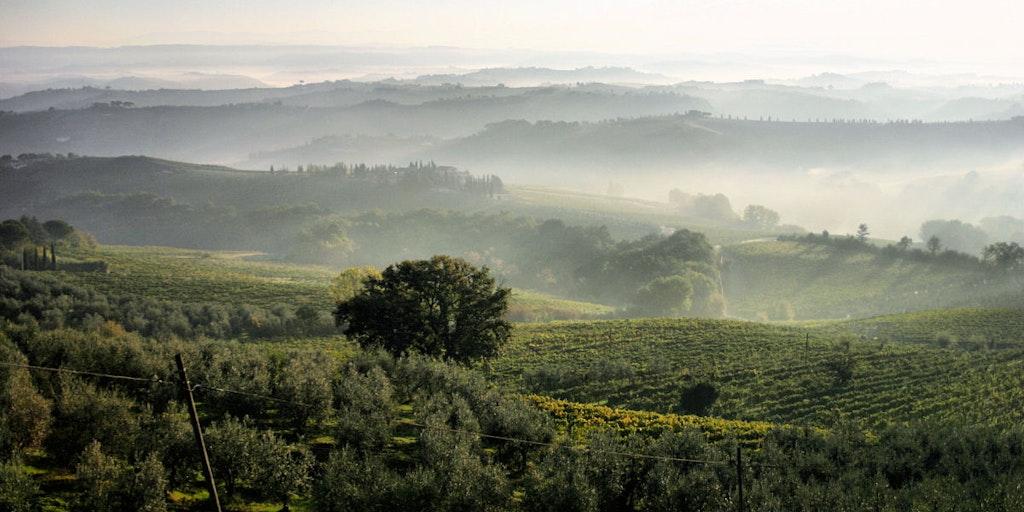Les collines du Chianti au matin