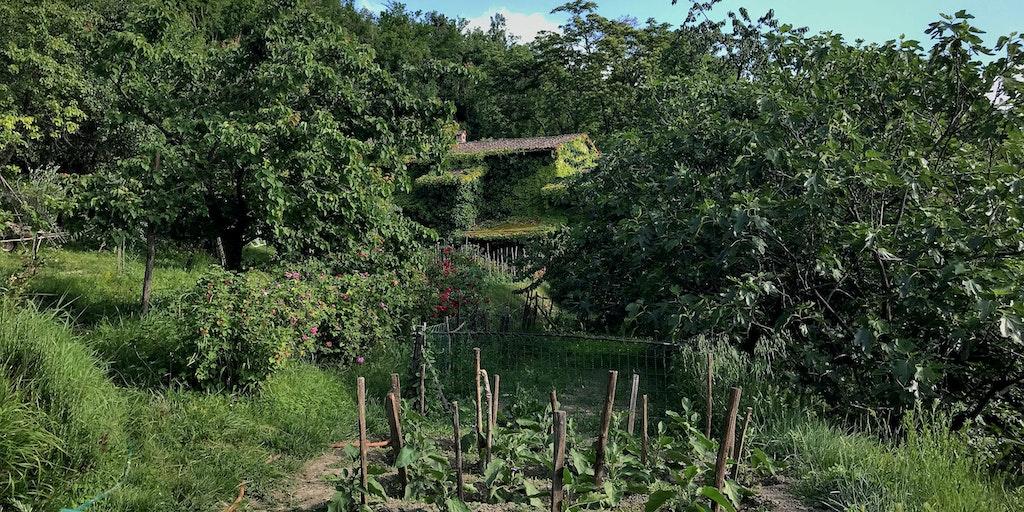 <p>Den velplejede grøntsagershave</p>