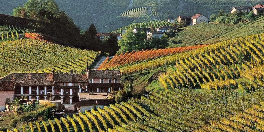 Die geschwungenen Weinberge im Piemont