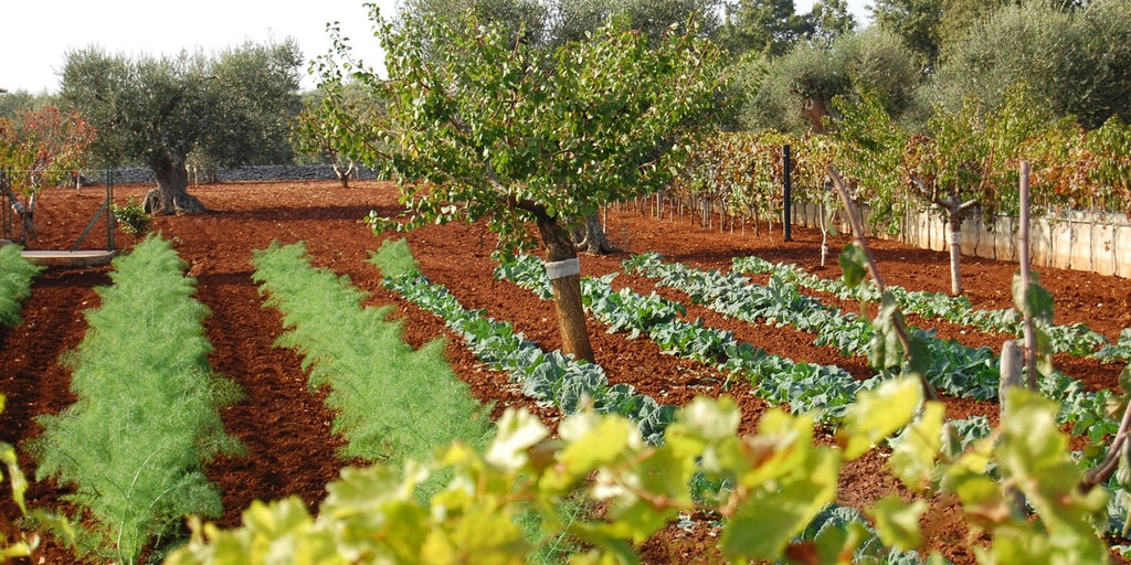 Apulia is also called Italy's vegetable garden