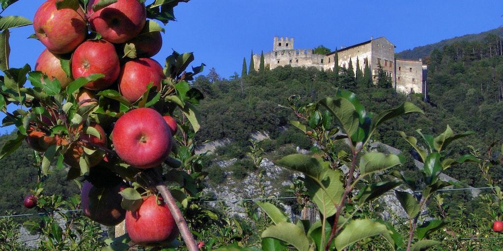 Regionen producerer store mængder æbler