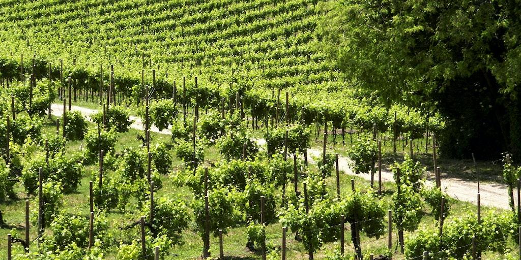 Das Valpolicella - Weinanbaugebiet