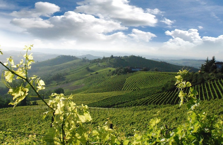 Vineyard wine holiday accommodation vacation in Italy