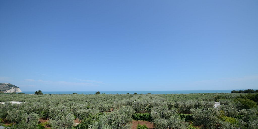 Infinite olive groves