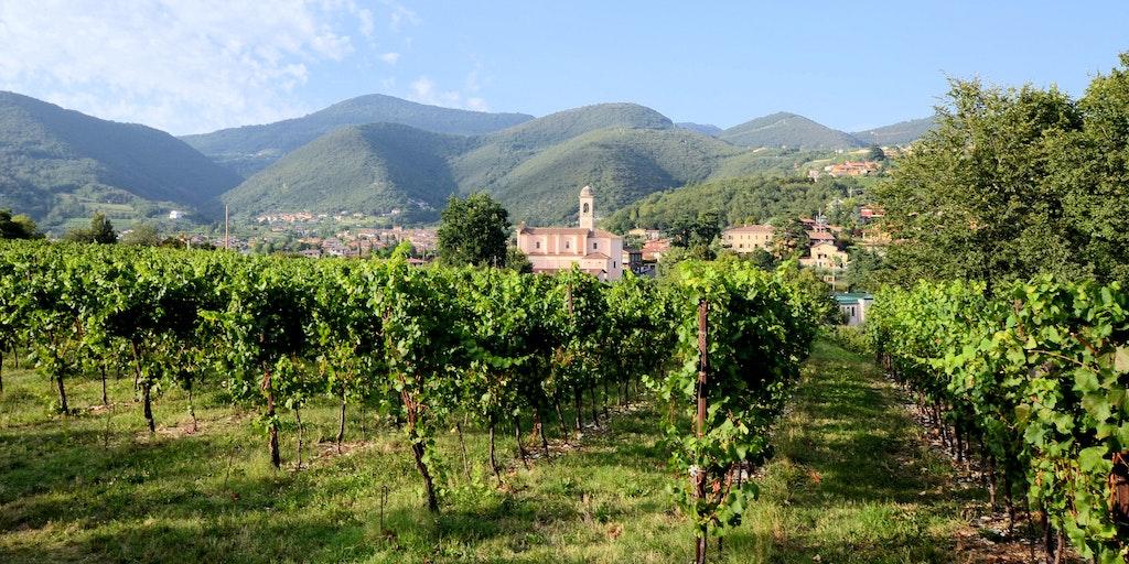 Les vignes de la Franciacorta