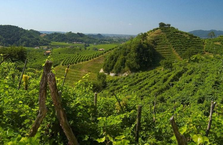 Prosecco Weinanbaugebiet Ferienhauser Ferienwohnungen Und Hotels