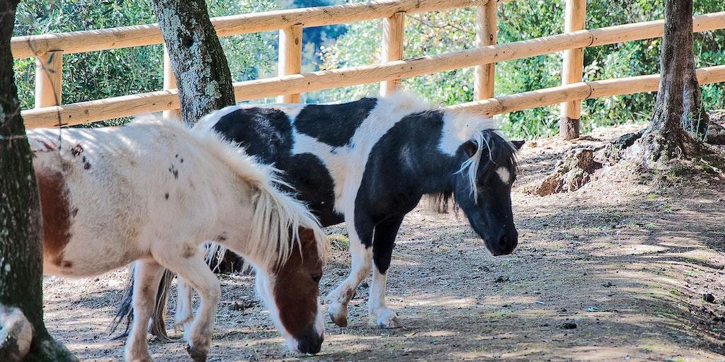 The ponies