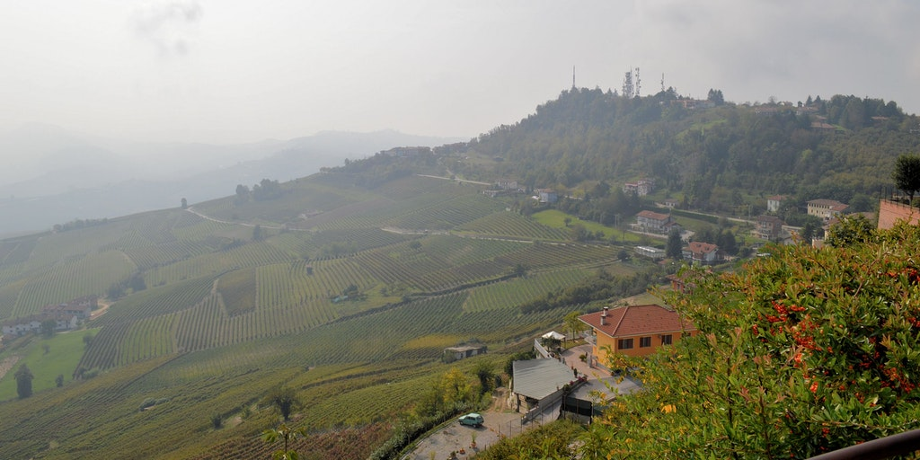 Views over the vineyards from La Morra