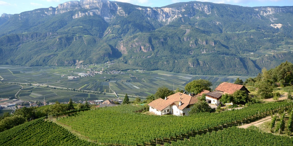 Vindistrikt mellan Bolzano och Trento, vid Caldaro