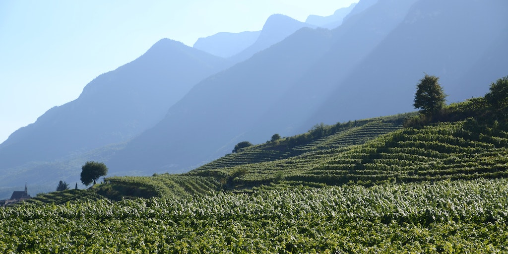 Wine Region between Bolzano and Trento, at Caldaro